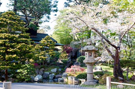金門公園日式茶園櫻花