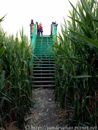 金氏世界紀錄最大玉米田迷宮