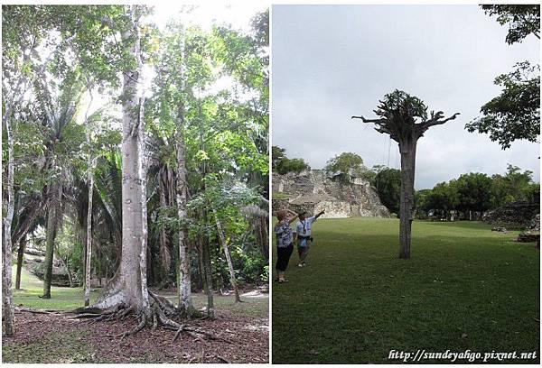 馬雅人的聖樹