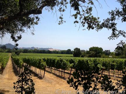 北加州索諾瑪Healdsburg葡萄酒區