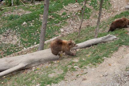 瑞士伯恩熊公園