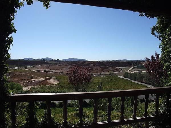 葡萄園景致