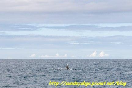 聖地牙哥賞鯨