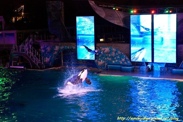 Shamu Show at Night