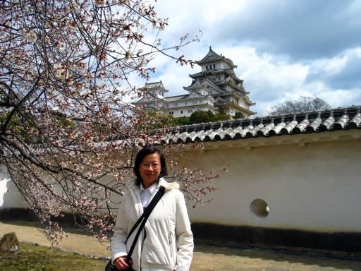 春櫻裡的姫路城