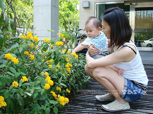 20小柚子對花有興趣.jpg