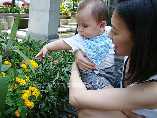 21黃色小花.jpg