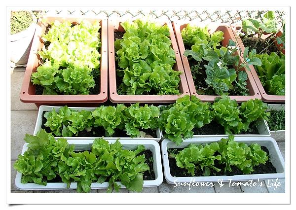 蔬菜豐收-01.JPG