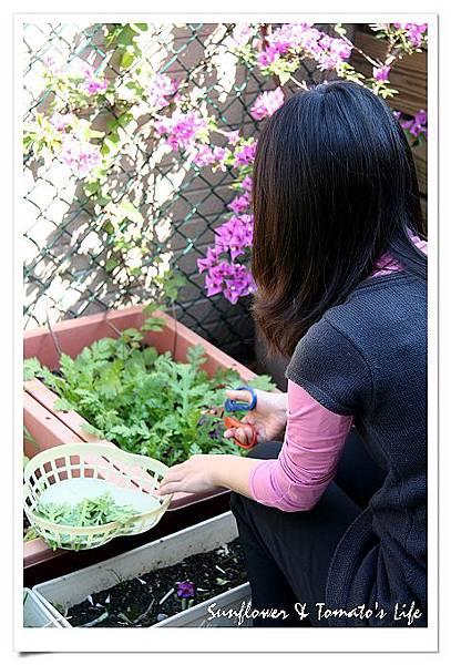 蔬菜豐收-04.JPG