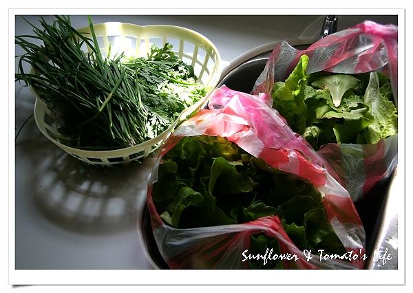 蔬菜豐收-05.JPG