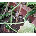 小黃瓜-09.jpg
