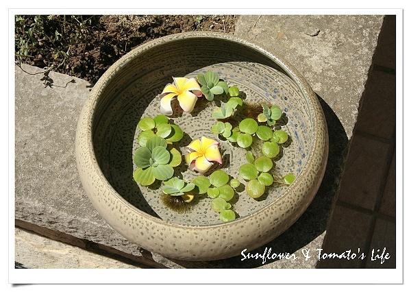 鶯歌陶瓷-05.JPG