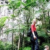 8.Excursion-rainforest