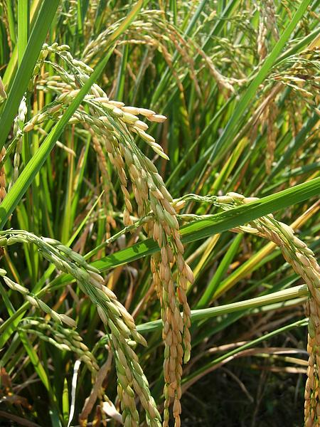 harvest_20121