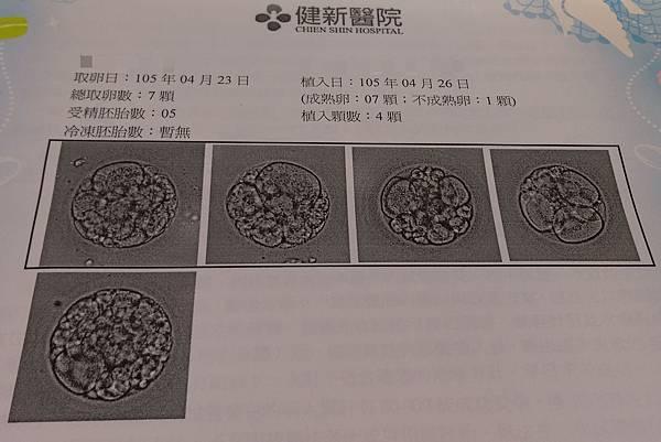 2016.04.26胚胎.jpg