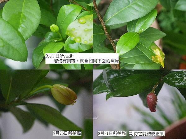 開花結果成長歷程 2