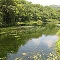 福山植物園的生態池