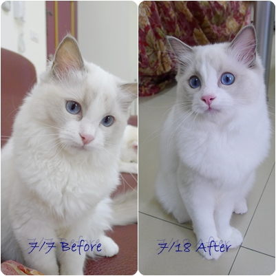 before after 2.jpg