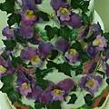 5層蘭花蛋糕2