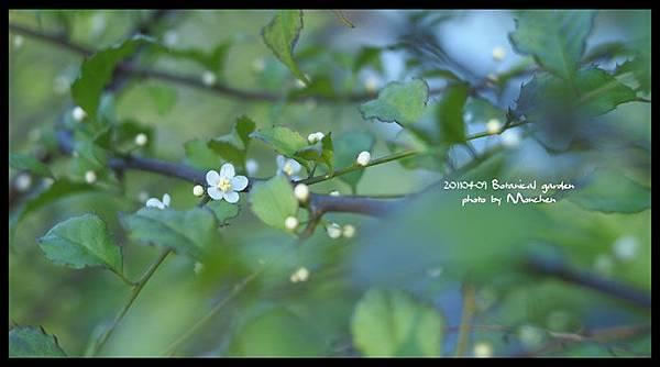 植物園010.jpg
