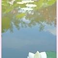 20110619 017 荷花季.jpg