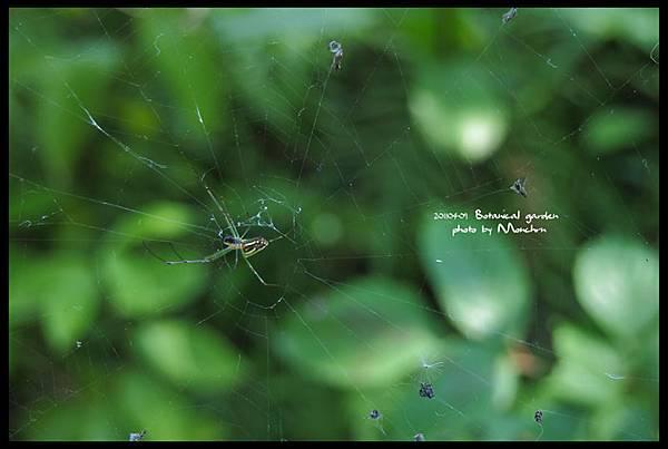 植物園01.jpg