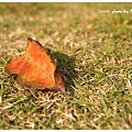 華山公園-落葉.jpg