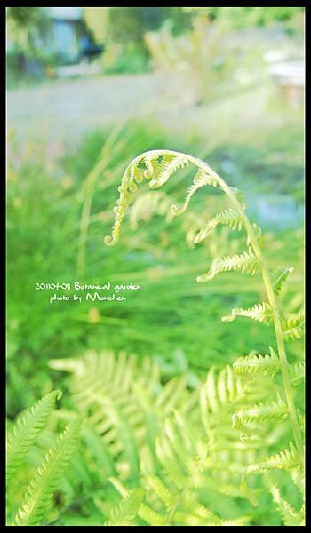 植物園09.jpg