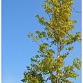 華山公園-樹(後製對比加重).jpg