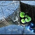 植物園04.jpg