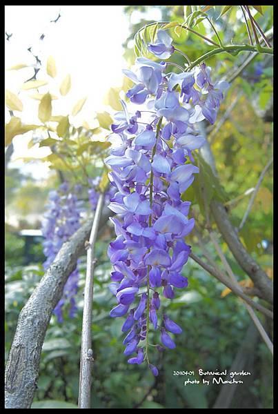 植物園012.jpg