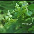 植物園014.jpg