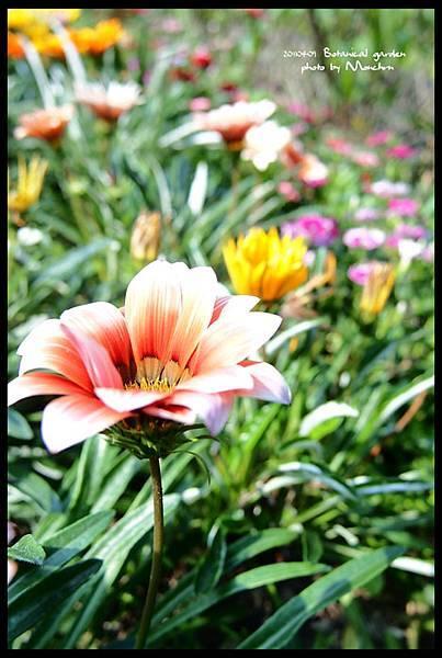 植物園07.jpg