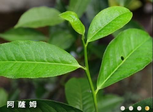 日月潭紅茶廠B1