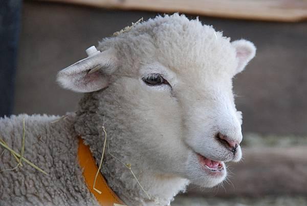 羊年吉祥話1