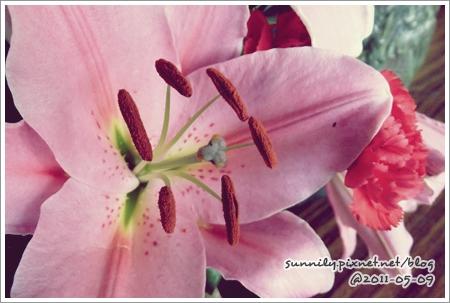 花卉#003-2