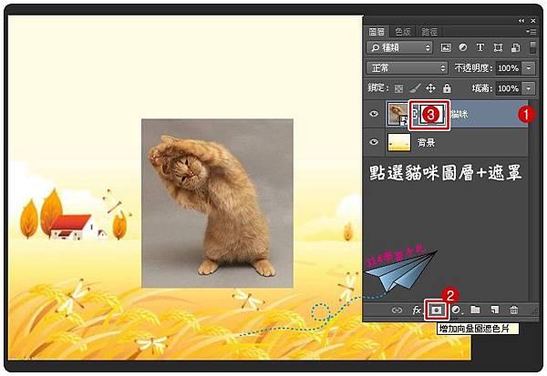 貓咪去背-2.jpg