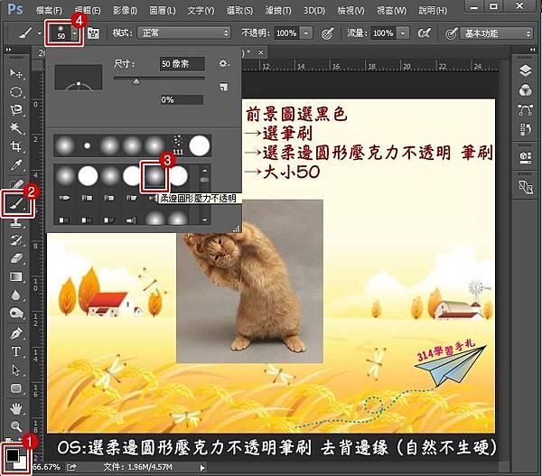 貓咪去背-3.jpg