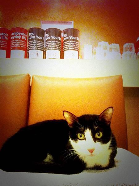 永和,貓藝家。