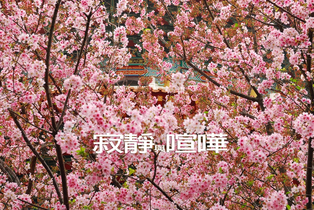 DSC_0136 天元宮  寂靜與喧嘩low
