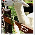 24.晴天小熊-淨園機場咖啡休閒農場-遊走峇里異國風