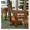 31.晴天小熊-淨園機場咖啡休閒農場-遊走峇里異國風