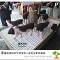 42.晴天小熊-淨園機場咖啡休閒農場-遊走峇里異國風