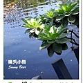 63.晴天小熊-淨園機場咖啡休閒農場-遊走峇里異國風