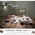 13.晴天小熊-自然科學博物館-從龍到獸,穿越化石代