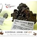 22.晴天小熊-自然科學博物館-從龍到獸,穿越化石代