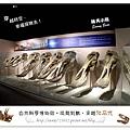 28.晴天小熊-自然科學博物館-從龍到獸,穿越化石代