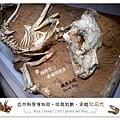 29.晴天小熊-自然科學博物館-從龍到獸,穿越化石代