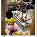 32.晴天小熊-自然科學博物館-從龍到獸,穿越化石代