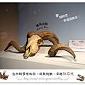 36.晴天小熊-自然科學博物館-從龍到獸,穿越化石代